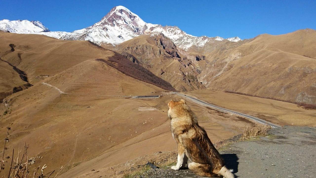 Cminda Sameba pies z gór