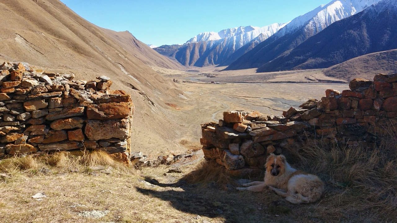 Dolina Truso - pies odpoczywający w cieniu twierdzy