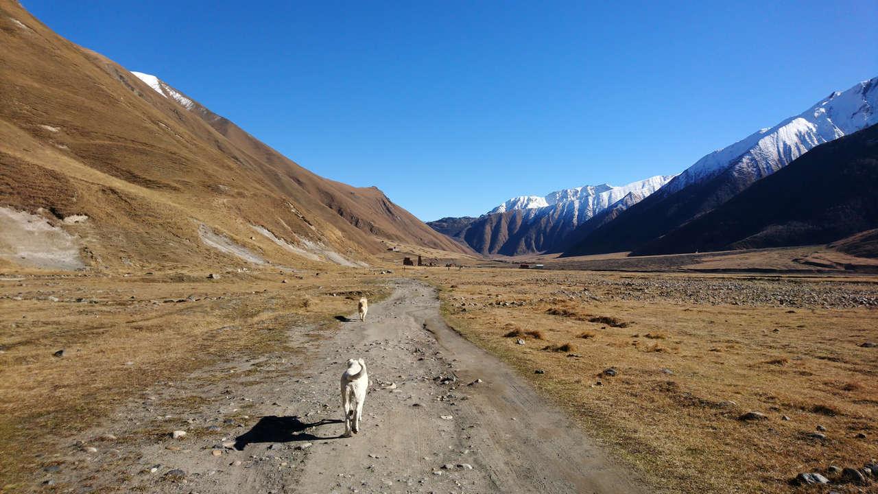 Dolina Truso - psy pasterskie, nasi towarzysze