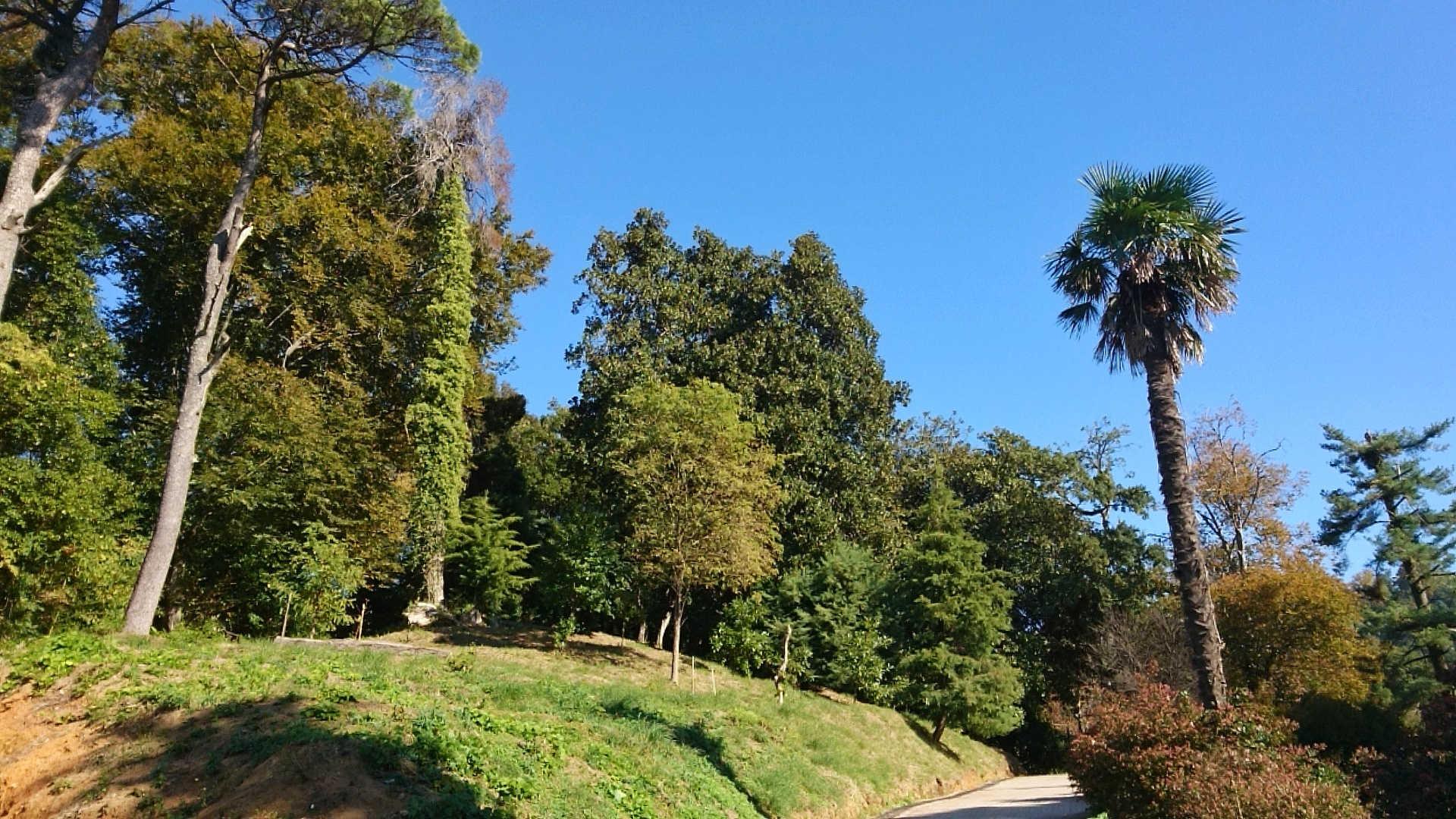 Batumi - ogród botaniczny 1