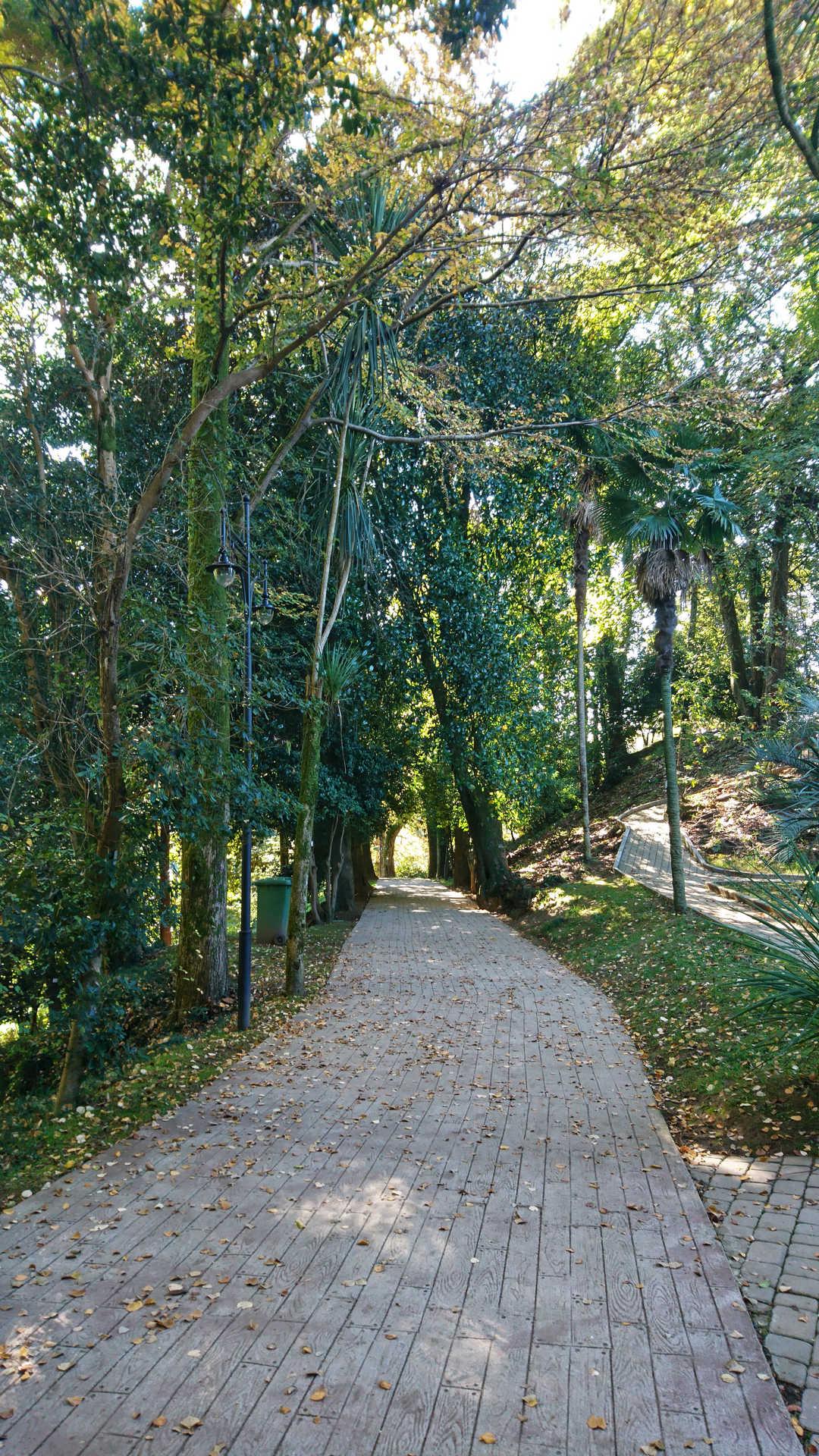 Batumi - ogród botaniczny 3