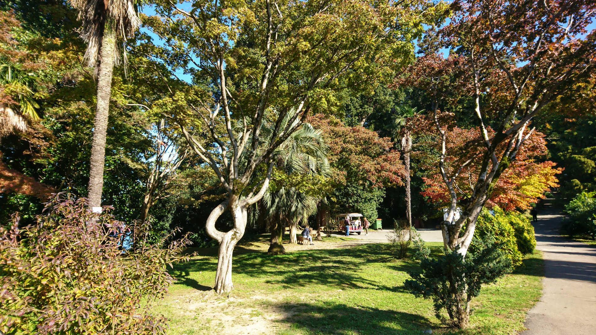 Batumi - ogród botaniczny 4