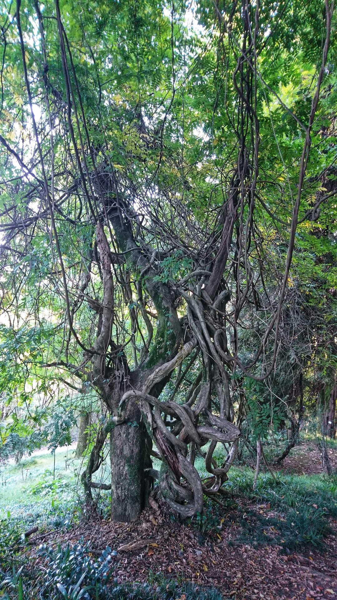 Batumi - ogród botaniczny 18