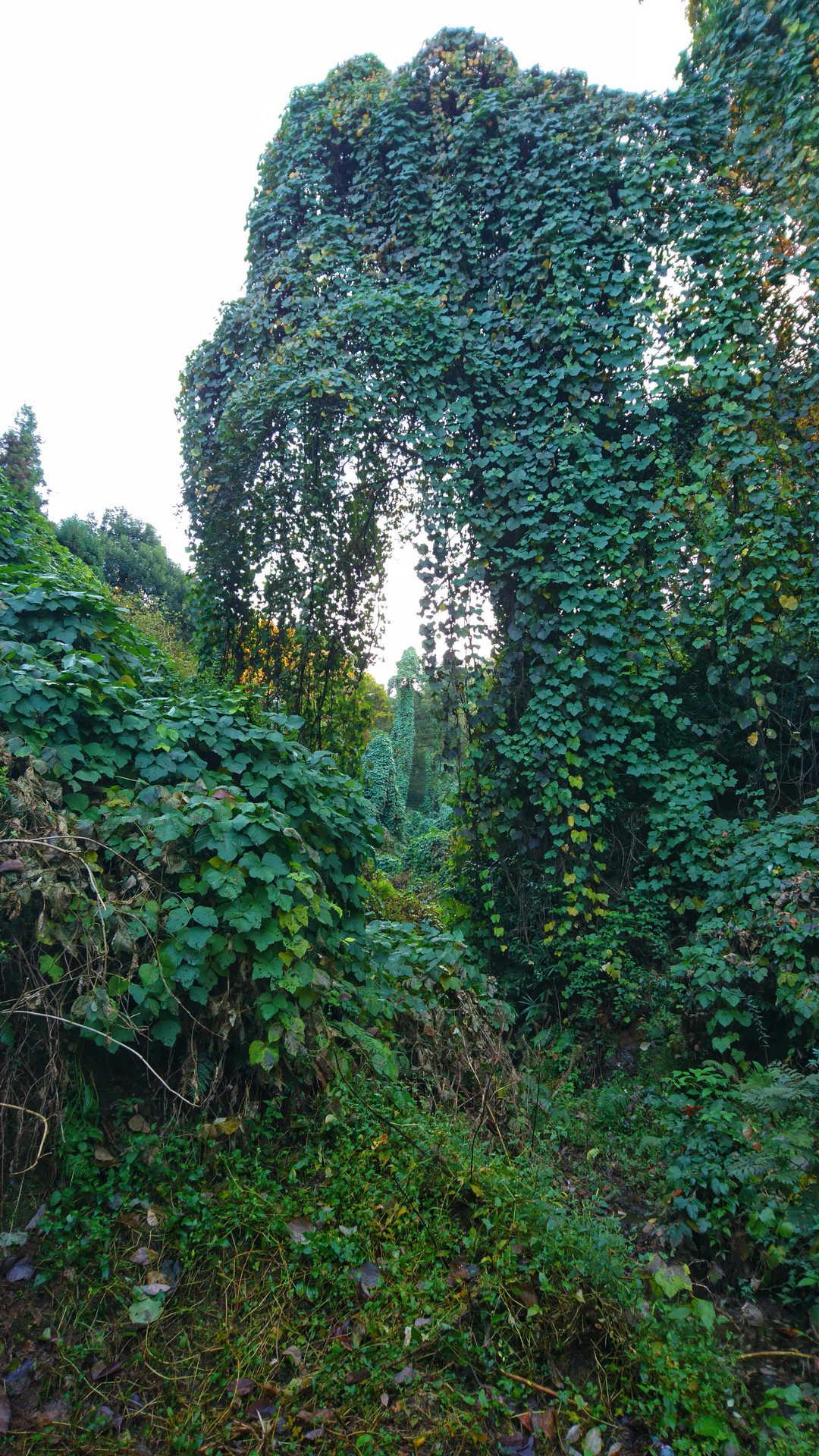 Batumi - ogród botaniczny 28