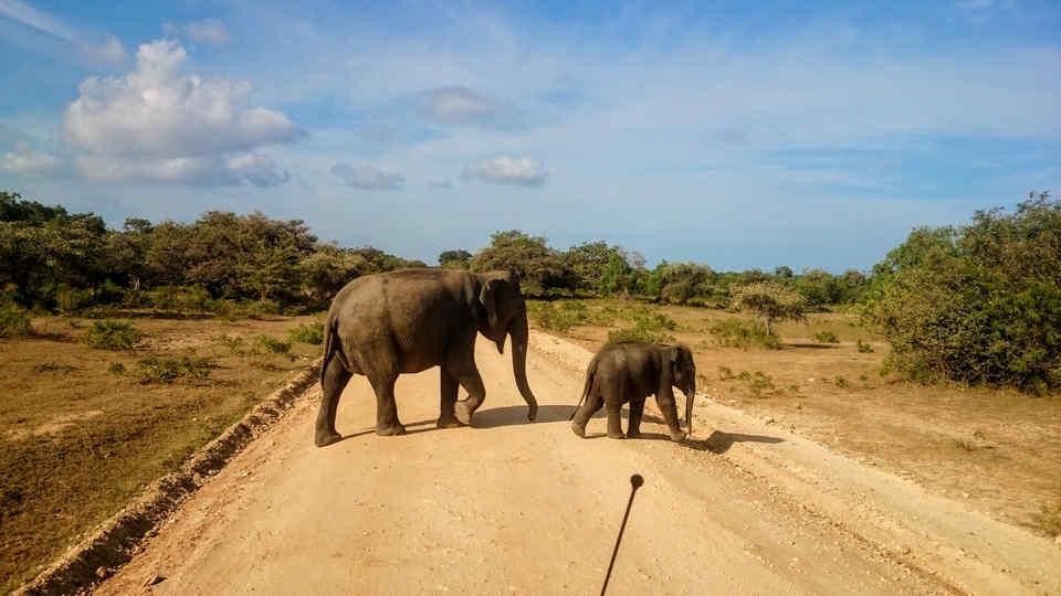 Safari w Yala